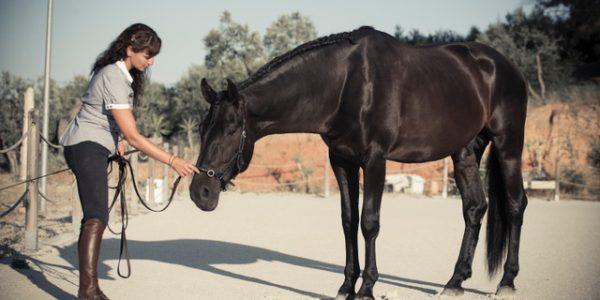 Pie a tierra, los fundamentos de la educacion de tu caballo